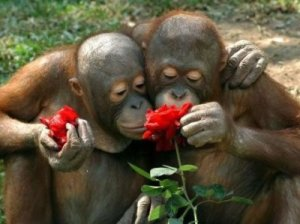 apes and roses