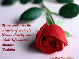 budda rose