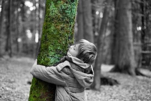 Love-Trees-Hug-a-tree-certificates