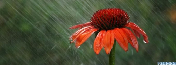flowers-in-the-rain-facebook-cover-timeline-banner-for-fb